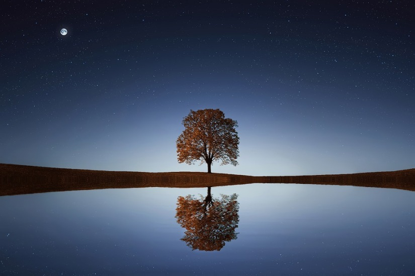 tree-838667_960_720